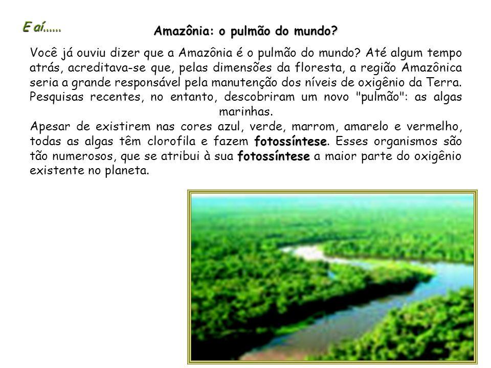 16 Amazônia: o pulmão do mundo.Você já ouviu dizer que a Amazônia é o pulmão do mundo.