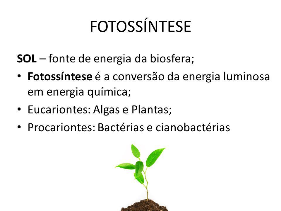 SOL – fonte de energia da biosfera; Fotossíntese é a conversão da energia luminosa em energia química; Eucariontes: Algas e Plantas; Procariontes: Bactérias e cianobactérias