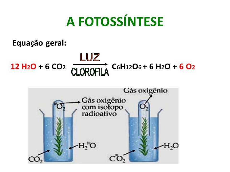 A FOTOSSÍNTESE Equação geral: 12 H 2 O + 6 CO 2 C 6 H 12 O 6 + 6 H 2 O + 6 O 2