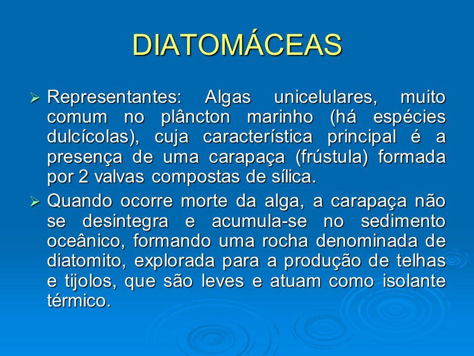 DIATOMÁCEAS Representantes: Algas unicelulares, muito comum no plâncton marinho (há espécies dulcícolas), cuja característica principal é a presença d
