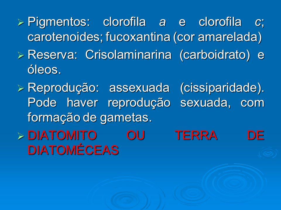 Pigmentos: clorofila a e clorofila c; carotenoides; fucoxantina (cor amarelada) Pigmentos: clorofila a e clorofila c; carotenoides; fucoxantina (cor a