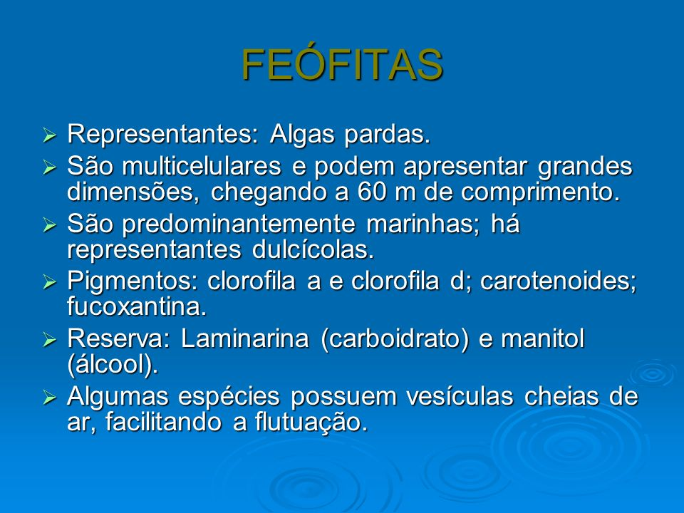 FEÓFITAS Representantes: Algas pardas. Representantes: Algas pardas. São multicelulares e podem apresentar grandes dimensões, chegando a 60 m de compr