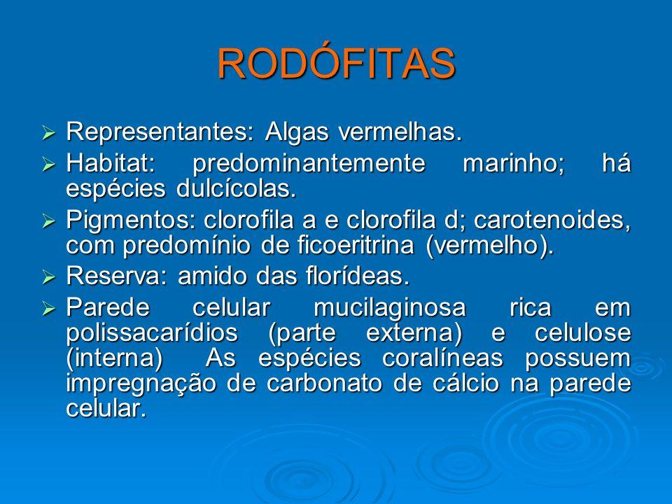 RODÓFITAS Representantes: Algas vermelhas. Representantes: Algas vermelhas. Habitat: predominantemente marinho; há espécies dulcícolas. Habitat: predo