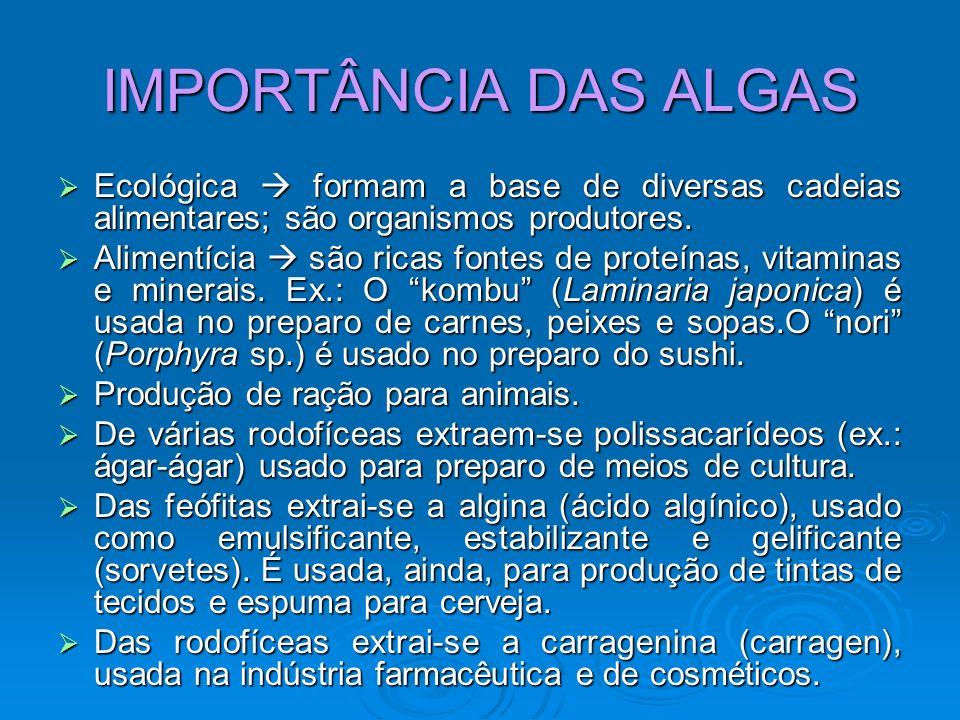 IMPORTÂNCIA DAS ALGAS Ecológica formam a base de diversas cadeias alimentares; são organismos produtores. Ecológica formam a base de diversas cadeias