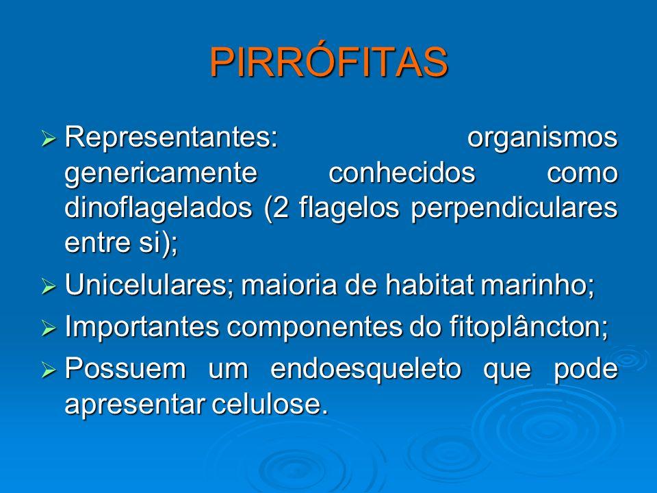 Ceratium Peridinium Noctiluca
