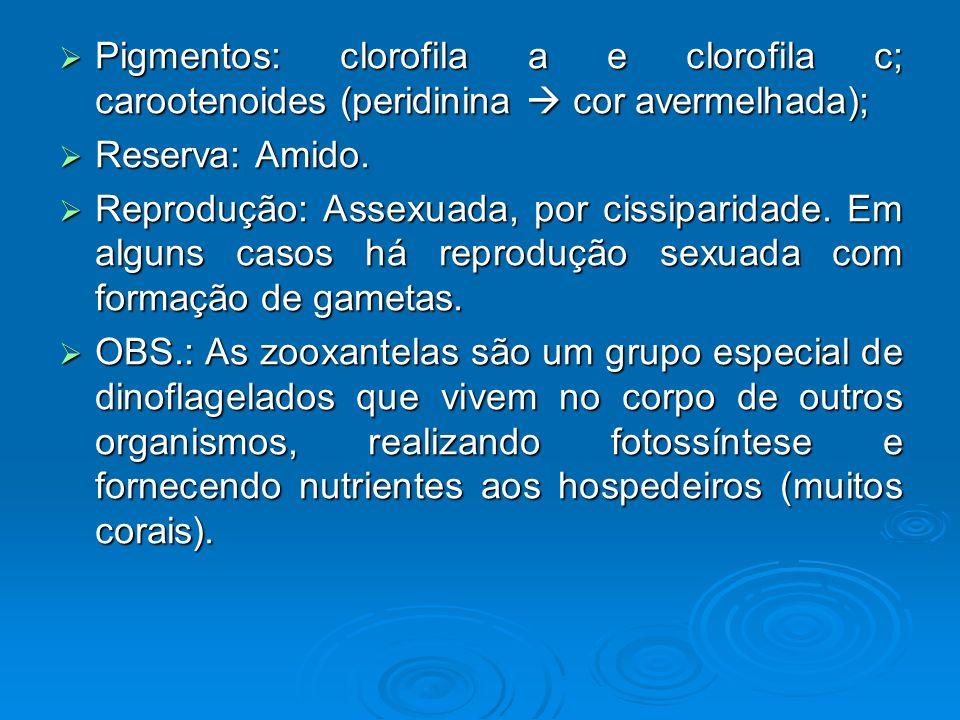 Pigmentos: clorofila a e clorofila c; carootenoides (peridinina cor avermelhada); Pigmentos: clorofila a e clorofila c; carootenoides (peridinina cor