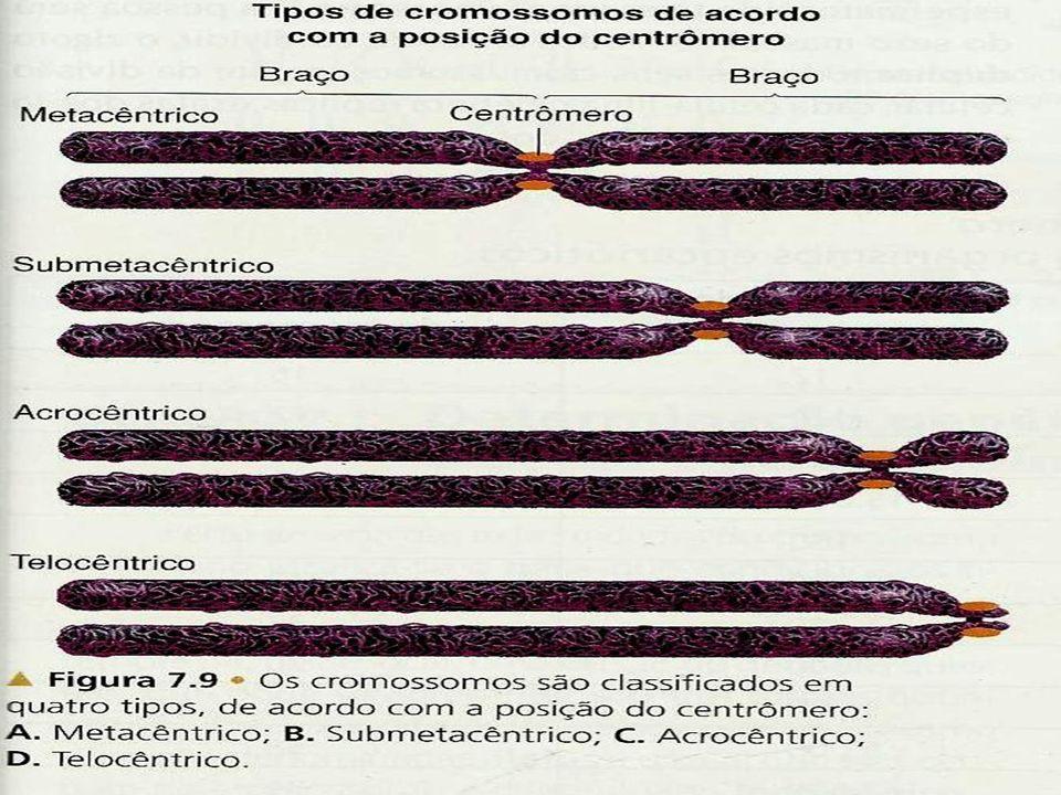 CROMOSSOMOS