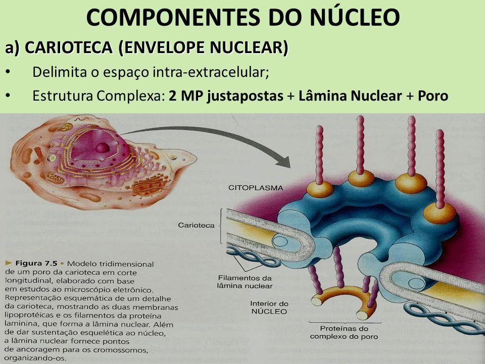 COMPONENTES DO NÚCLEO a) CARIOTECA (ENVELOPE NUCLEAR) Delimita o espaço intra-extracelular; Estrutura Complexa: 2 MP justapostas + Lâmina Nuclear + Po