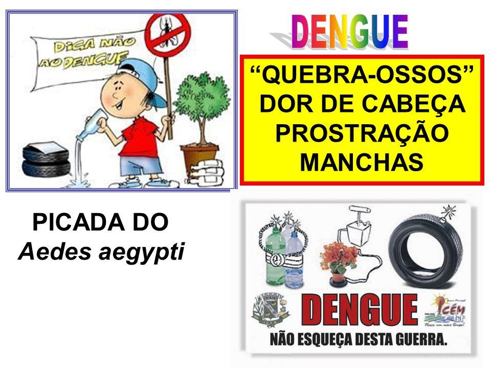 QUEBRA-OSSOS DOR DE CABEÇA PROSTRAÇÃO MANCHAS PICADA DO Aedes aegypti