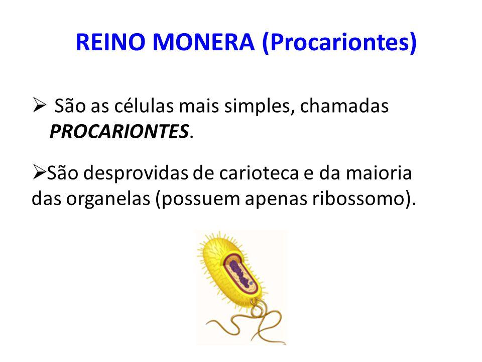 Exemplos de Doenças Humanas causadas por Bactérias Clostridium tetani - (Tétano)