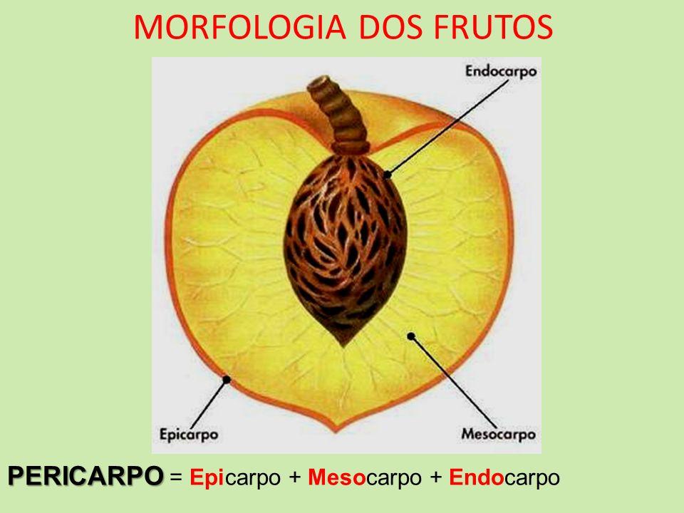 MORFOLOGIA DOS FRUTOS PERICARPO PERICARPO = Epicarpo + Mesocarpo + Endocarpo