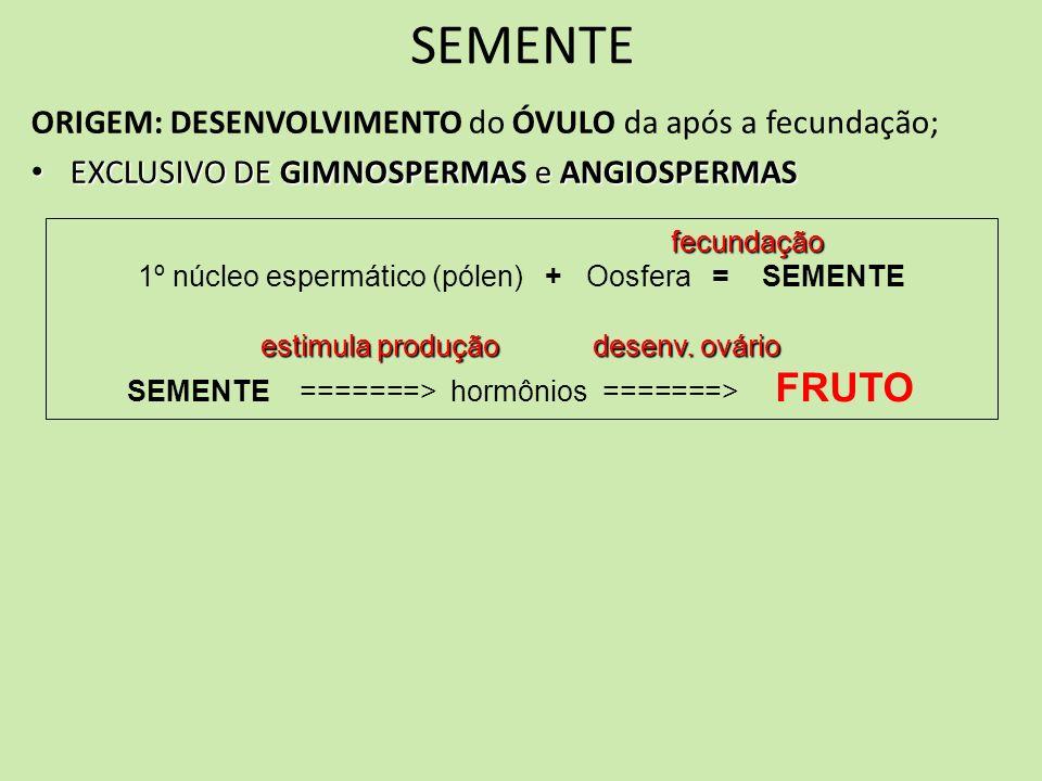 SEMENTE ORIGEM: DESENVOLVIMENTO do ÓVULO da após a fecundação; EXCLUSIVO DE GIMNOSPERMAS e ANGIOSPERMAS EXCLUSIVO DE GIMNOSPERMAS e ANGIOSPERMAS fecun