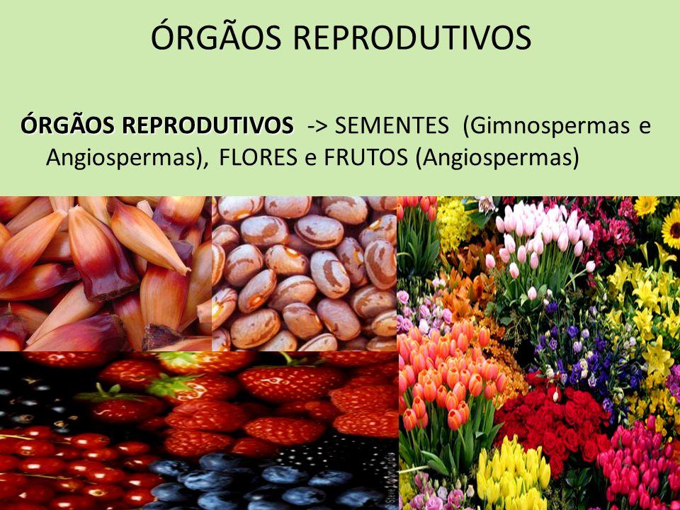 ÓRGÃOS REPRODUTIVOS ÓRGÃOS REPRODUTIVOS ÓRGÃOS REPRODUTIVOS -> SEMENTES (Gimnospermas e Angiospermas), FLORES e FRUTOS (Angiospermas)