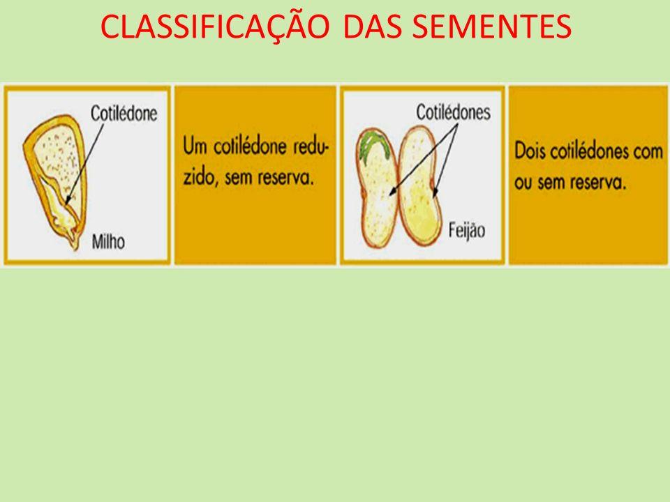 CLASSIFICAÇÃO DAS SEMENTES