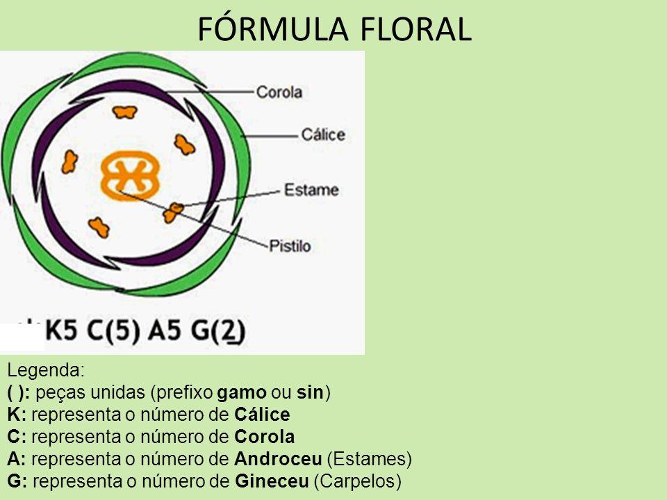 FÓRMULA FLORAL Legenda: ( ): peças unidas (prefixo gamo ou sin) K: representa o número de Cálice C: representa o número de Corola A: representa o núme
