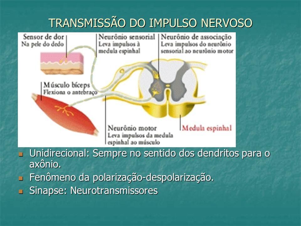 TRANSMISSÃO DO IMPULSO NERVOSO Unidirecional: Sempre no sentido dos dendritos para o axônio. Unidirecional: Sempre no sentido dos dendritos para o axô