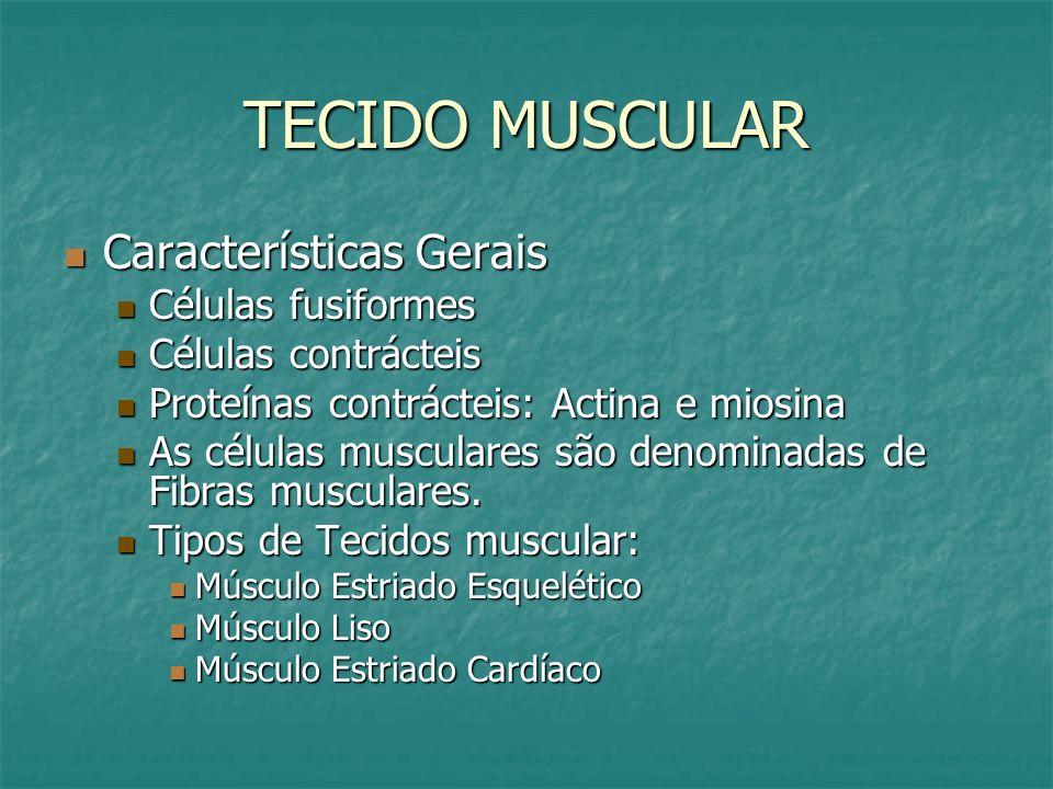 TECIDO MUSCULAR Características Gerais Características Gerais Células fusiformes Células fusiformes Células contrácteis Células contrácteis Proteínas