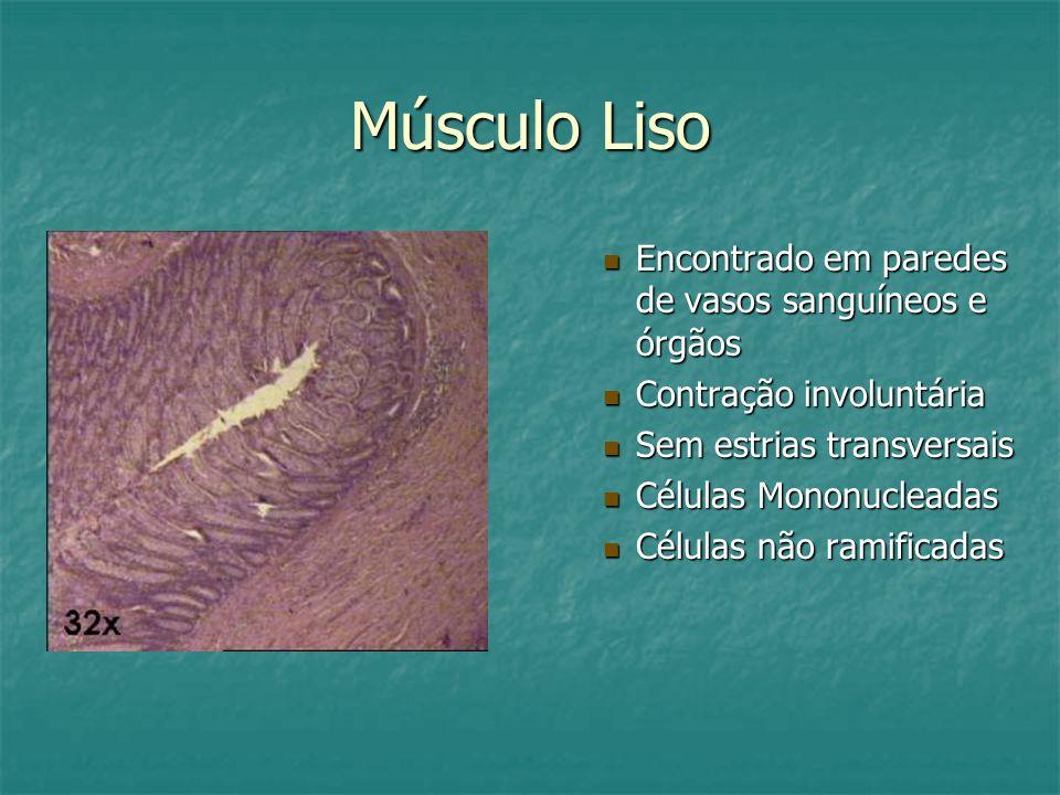 Músculo Liso Encontrado em paredes de vasos sanguíneos e órgãos Contração involuntária Sem estrias transversais Células Mononucleadas Células não rami