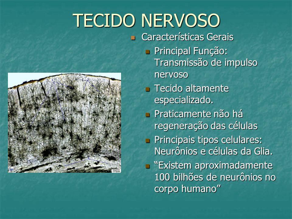 TECIDO NERVOSO Características Gerais Características Gerais Principal Função: Transmissão de impulso nervoso Tecido altamente especializado. Praticam