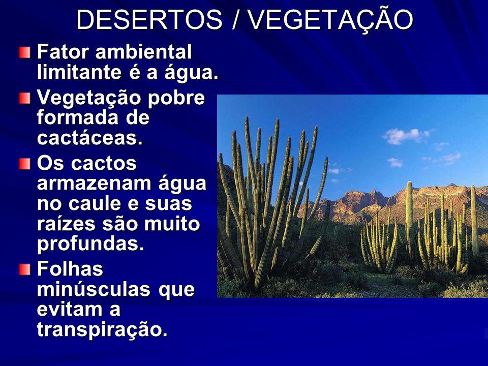 DESERTOS / VEGETAÇÃO Fator ambiental limitante é a água. Vegetação pobre formada de cactáceas. Os cactos armazenam água no caule e suas raízes são mui