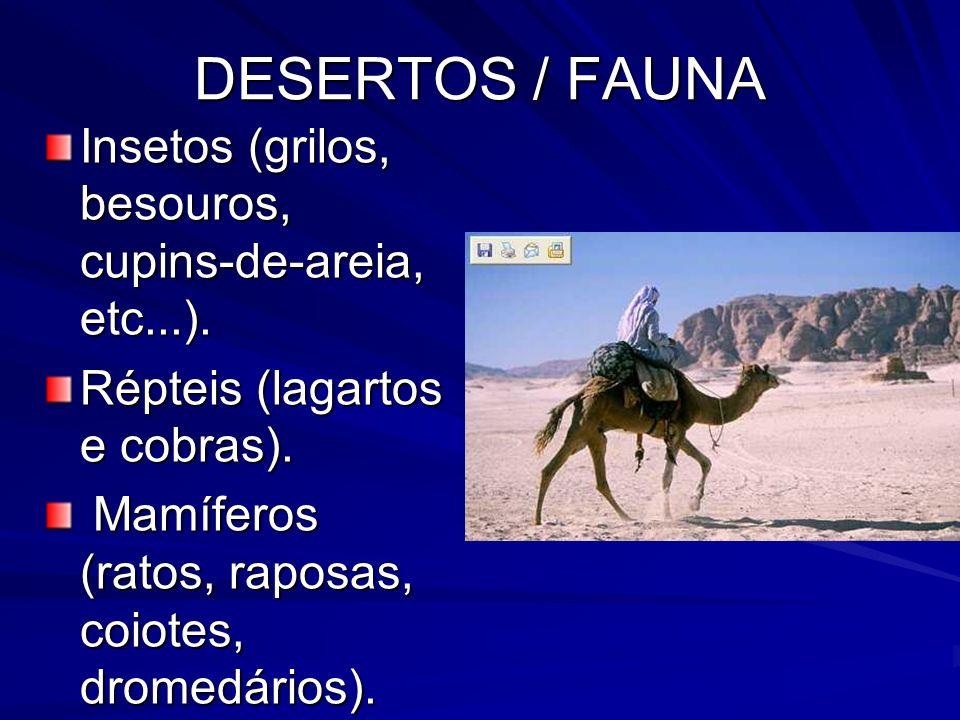 DESERTOS / FAUNA Insetos (grilos, besouros, cupins-de-areia, etc...). Répteis (lagartos e cobras). Mamíferos (ratos, raposas, coiotes, dromedários). M