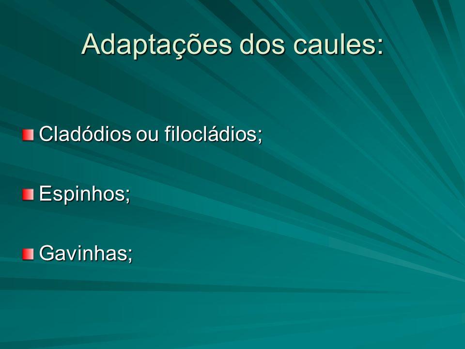 Adaptações dos caules: Cladódios ou filocládios; Espinhos;Gavinhas;