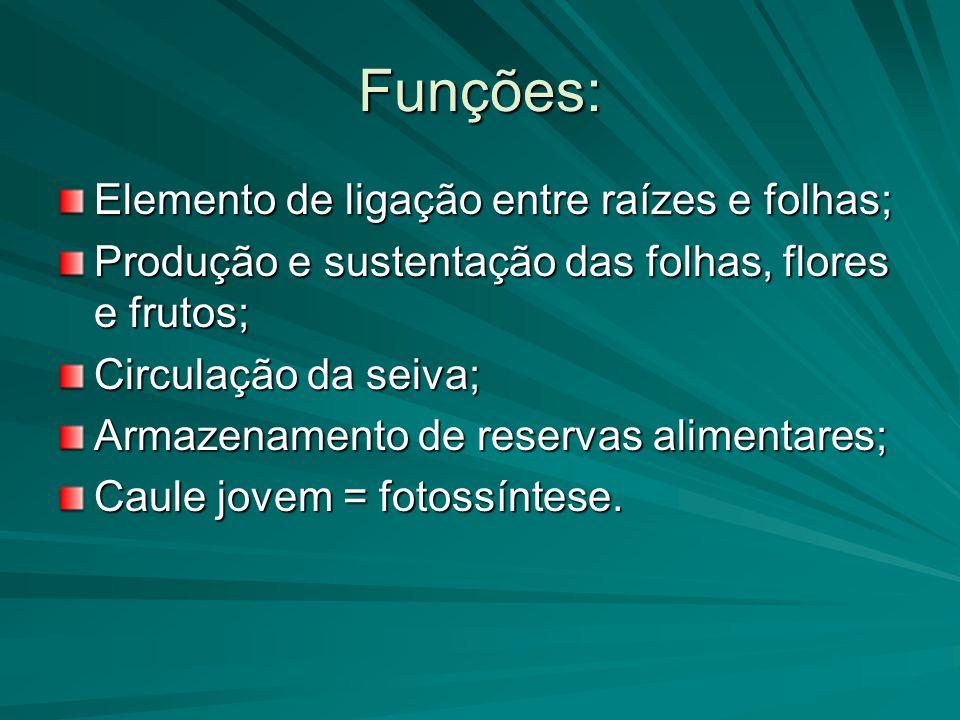 Funções: Elemento de ligação entre raízes e folhas; Produção e sustentação das folhas, flores e frutos; Circulação da seiva; Armazenamento de reservas