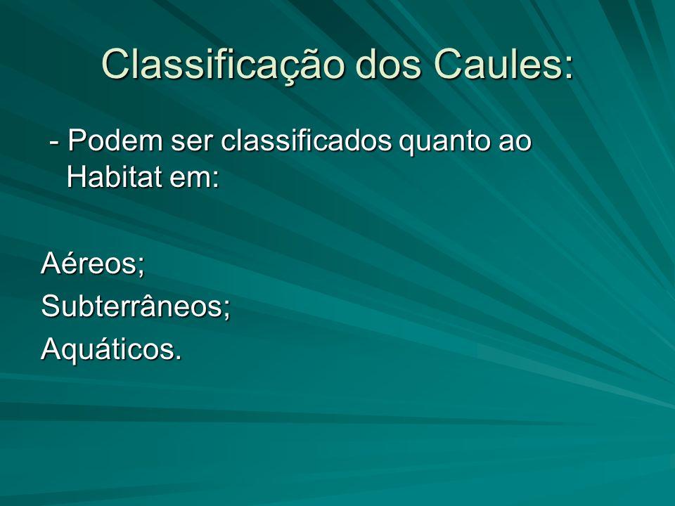 Classificação dos Caules: - Podem ser classificados quanto ao Habitat em: - Podem ser classificados quanto ao Habitat em:Aéreos;Subterrâneos;Aquáticos