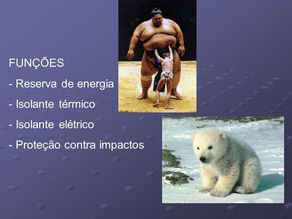 FUNÇÕES - Reserva de energia - Isolante térmico - Isolante elétrico - Proteção contra impactos