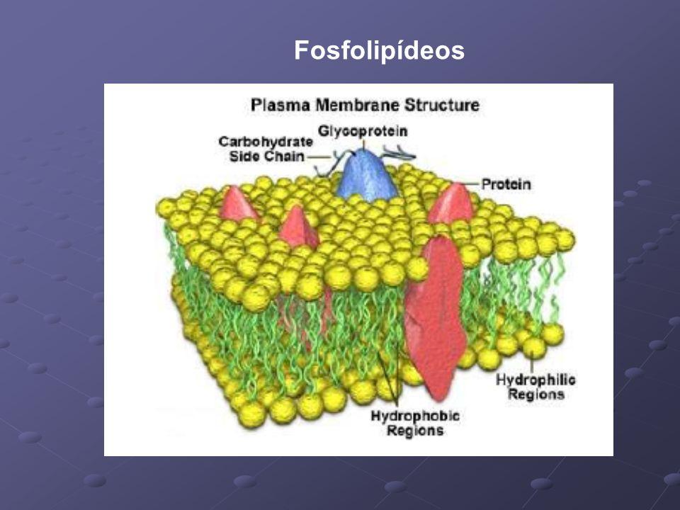 Fosfolipídeos
