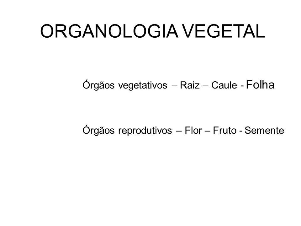 ORGANOLOGIA VEGETAL Órgãos vegetativos – Raiz – Caule - Folha Órgãos reprodutivos – Flor – Fruto - Semente