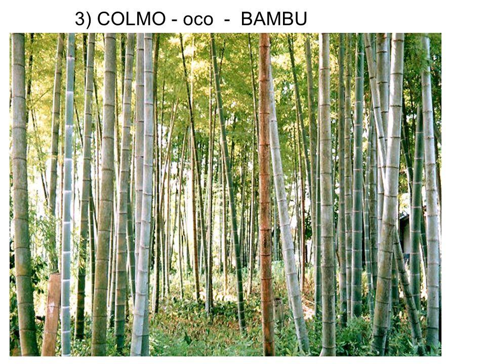 3) COLMO - oco - BAMBU