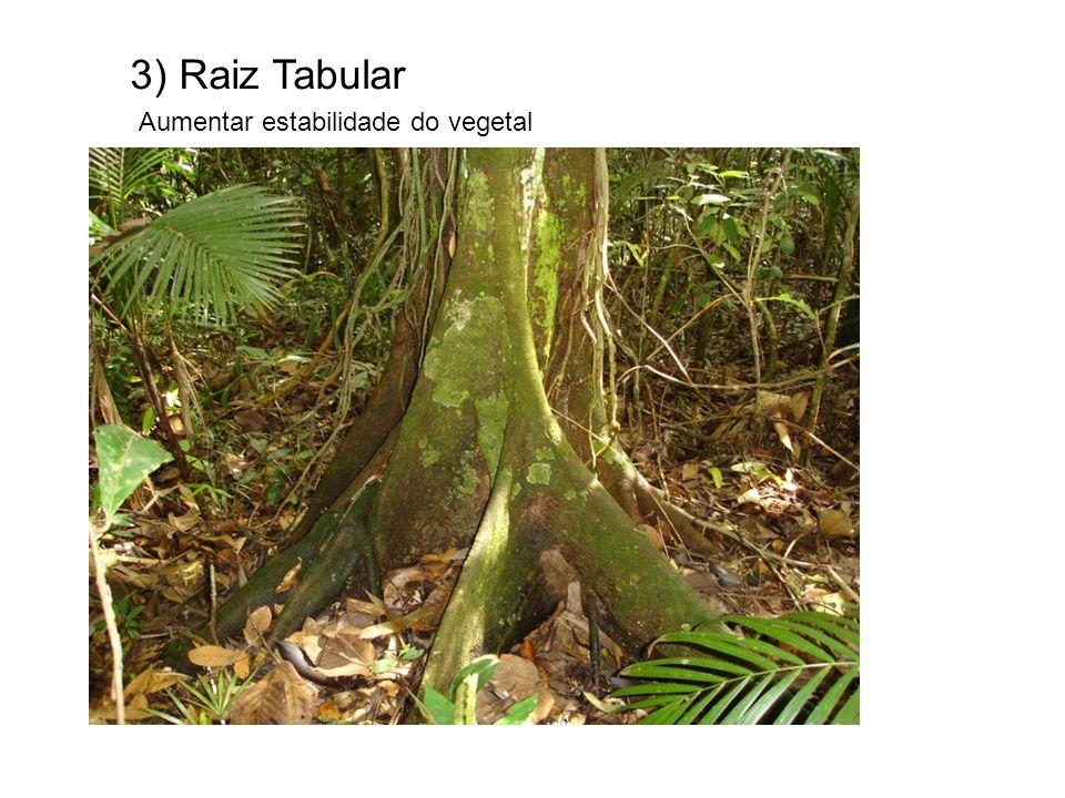GAVINHAS Exemplo – Maracujá e uva Nas ervilhas é morfose de FOLHA