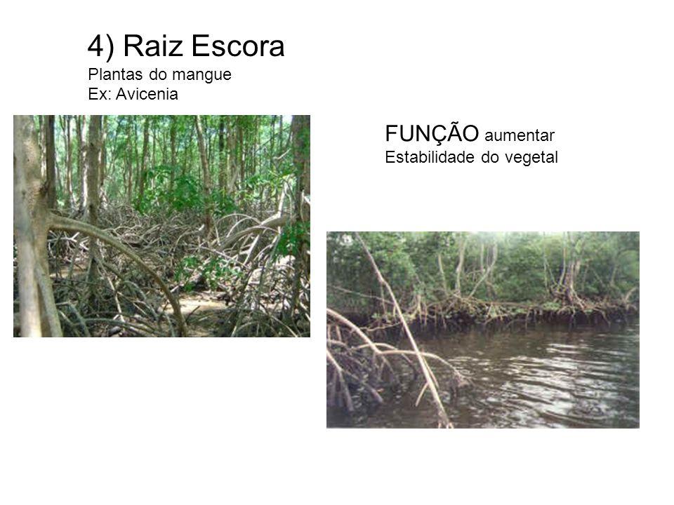5) Caule ESTOLÃO Morango - grama Caule rastejante ocorre também na grama