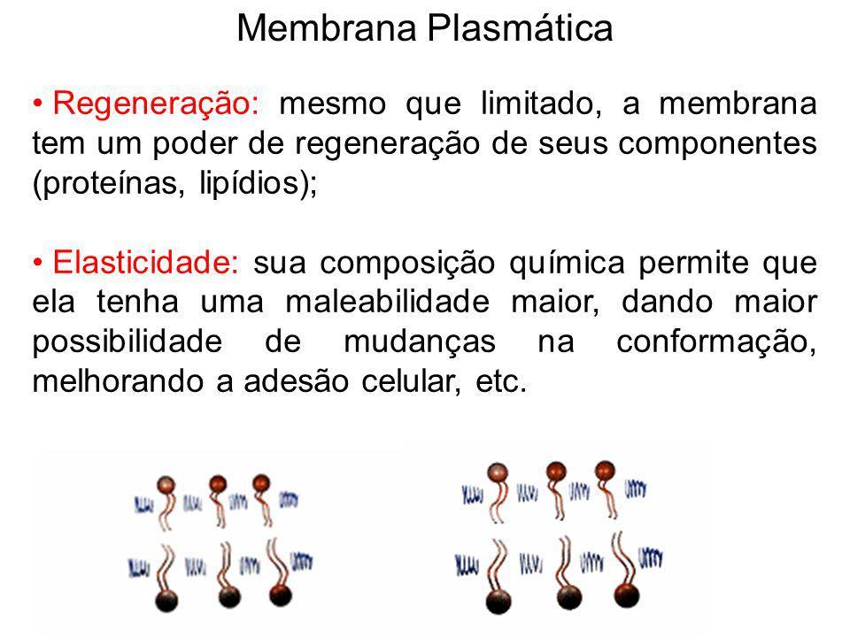 Membrana Plasmática Regeneração: mesmo que limitado, a membrana tem um poder de regeneração de seus componentes (proteínas, lipídios); Elasticidade: s