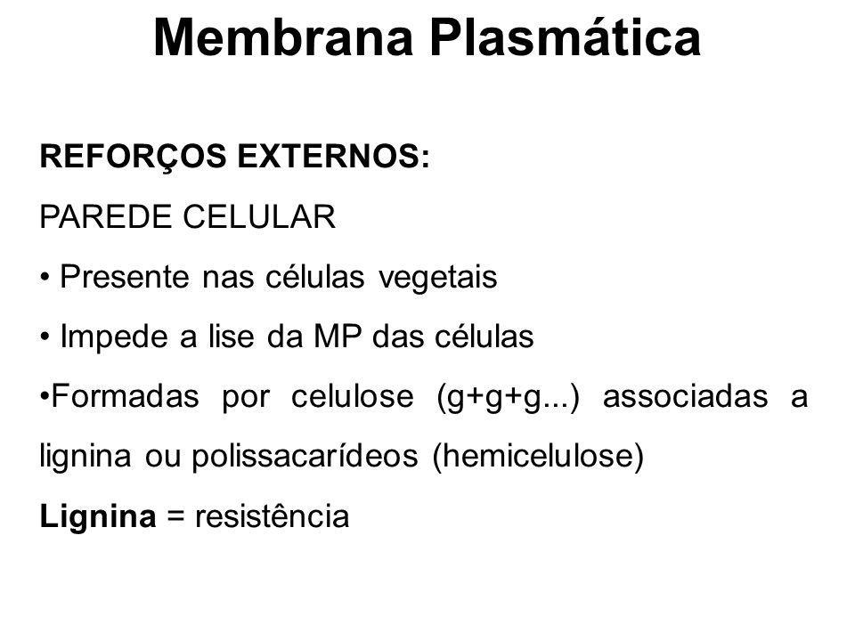 Membrana Plasmática REFORÇOS EXTERNOS: PAREDE CELULAR Presente nas células vegetais Impede a lise da MP das células Formadas por celulose (g+g+g...) a