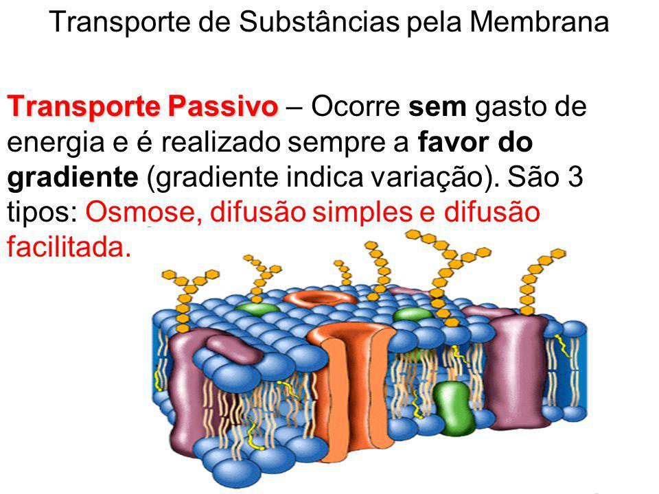 Transporte de Substâncias pela Membrana Transporte Passivo Transporte Passivo – Ocorre sem gasto de energia e é realizado sempre a favor do gradiente