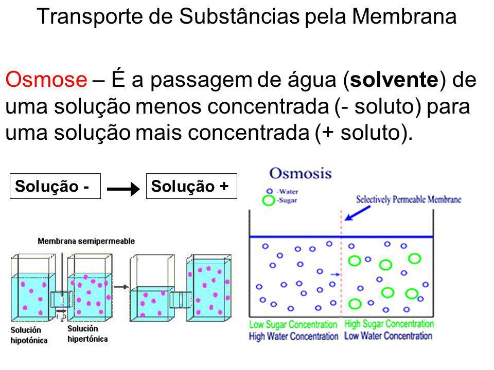 Transporte de Substâncias pela Membrana Osmose – É a passagem de água (solvente) de uma solução menos concentrada (- soluto) para uma solução mais con