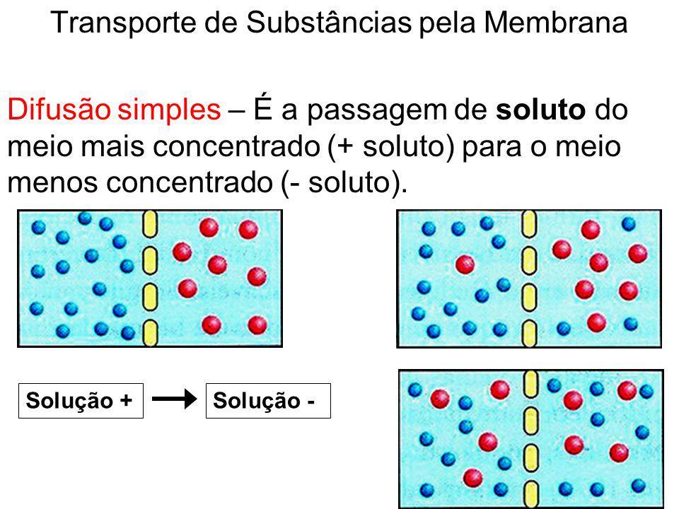 Transporte de Substâncias pela Membrana Difusão simples – É a passagem de soluto do meio mais concentrado (+ soluto) para o meio menos concentrado (-