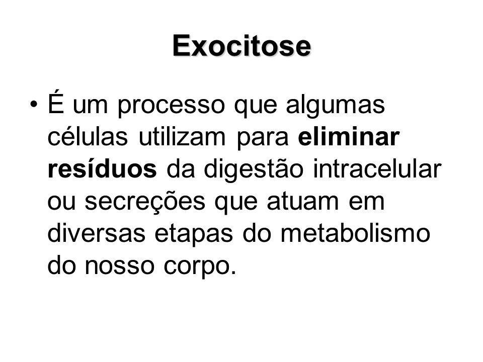 Exocitose É um processo que algumas células utilizam para eliminar resíduos da digestão intracelular ou secreções que atuam em diversas etapas do meta