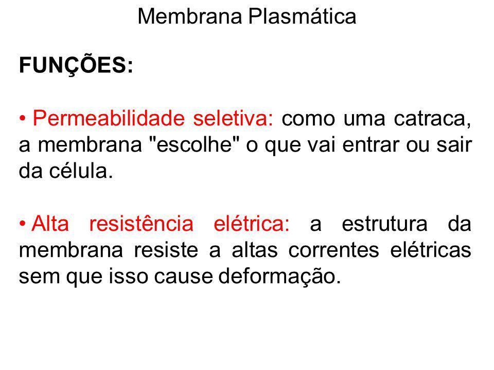 Membrana Plasmática FUNÇÕES: Permeabilidade seletiva: como uma catraca, a membrana