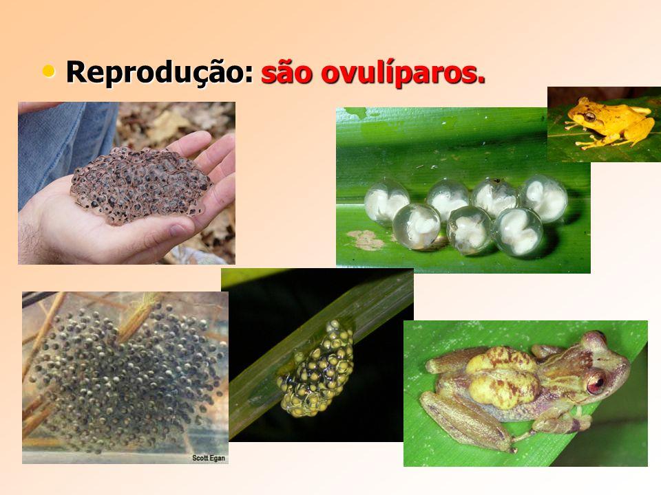 Reprodução: são ovulíparos. Reprodução: são ovulíparos.