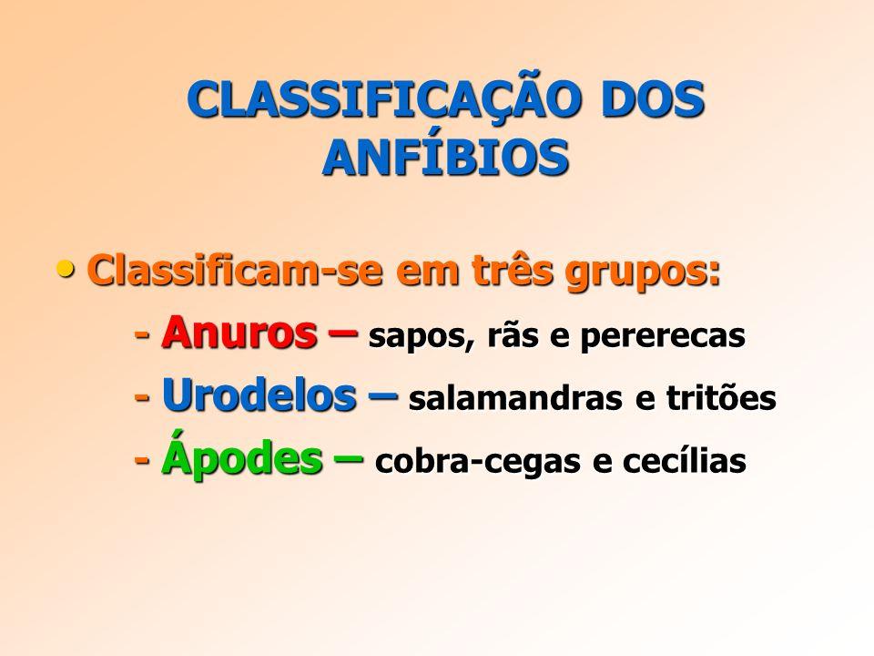 CLASSIFICAÇÃO DOS ANFÍBIOS Classificam-se em três grupos: Classificam-se em três grupos: - Anuros – sapos, rãs e pererecas - Anuros – sapos, rãs e pererecas - Urodelos – salamandras e tritões - Urodelos – salamandras e tritões - Ápodes – cobra-cegas e cecílias - Ápodes – cobra-cegas e cecílias