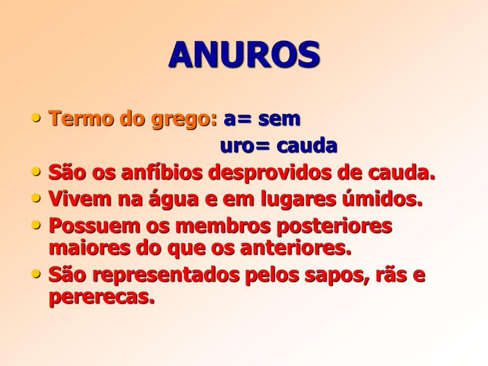 ANUROS Termo do grego: a= sem Termo do grego: a= sem uro= cauda uro= cauda São os anfíbios desprovidos de cauda.