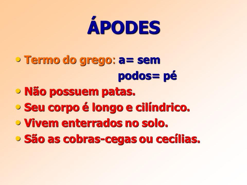 ÁPODES Termo do grego: a= sem Termo do grego: a= sem podos= pé podos= pé Não possuem patas.