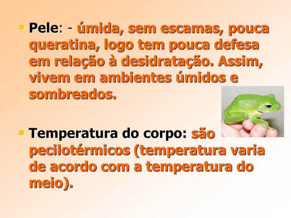 Pele: - úmida, sem escamas, pouca queratina, logo tem pouca defesa em relação à desidratação.