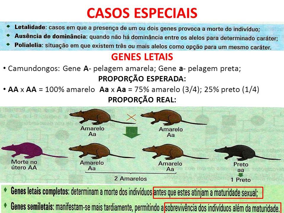 CASOS ESPECIAIS GENES LETAIS Camundongos: Gene A- pelagem amarela; Gene a- pelagem preta; PROPORÇÃO ESPERADA: AA x AA = 100% amarelo Aa x Aa = 75% amarelo (3/4); 25% preto (1/4) PROPORÇÃO REAL: