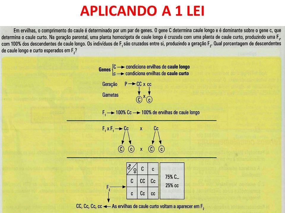 APLICANDO A 1 LEI