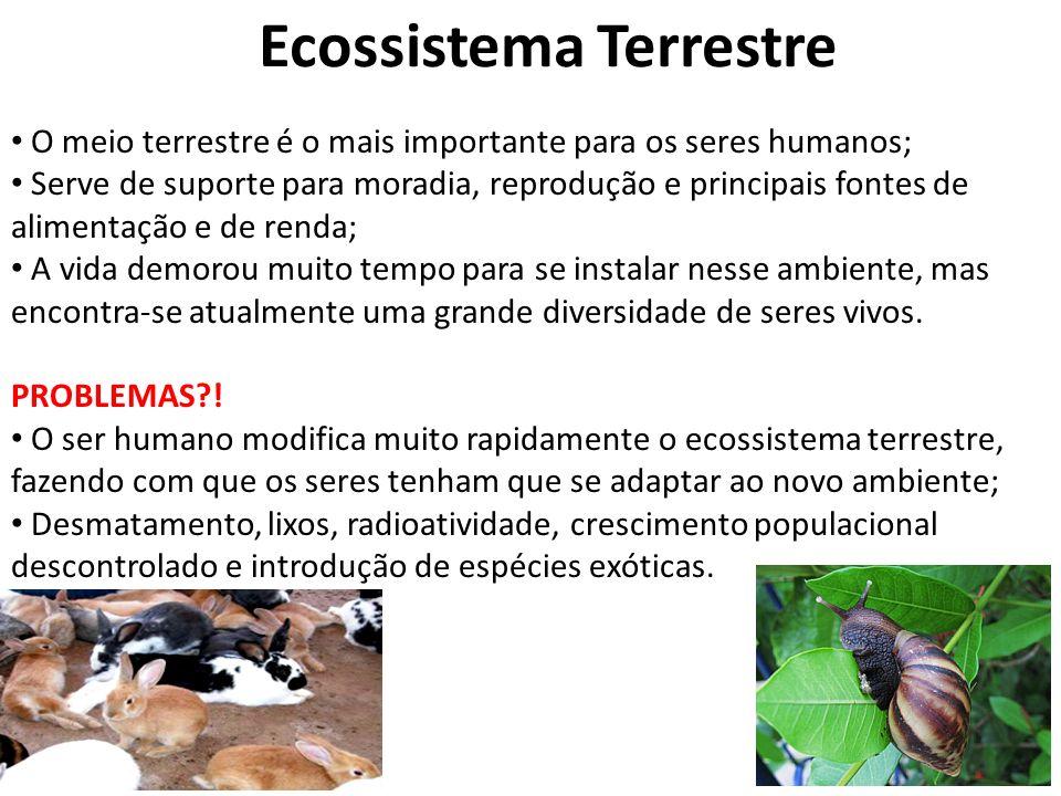 FLORESTA TROPICAL FLORESTA TROPICAL PLUVIAL: Localizadas entre os trópicos, recebem muito energia solar; Quente e úmida, alto índice pluviométrico Vegetação: Árvores com + de 50 m;