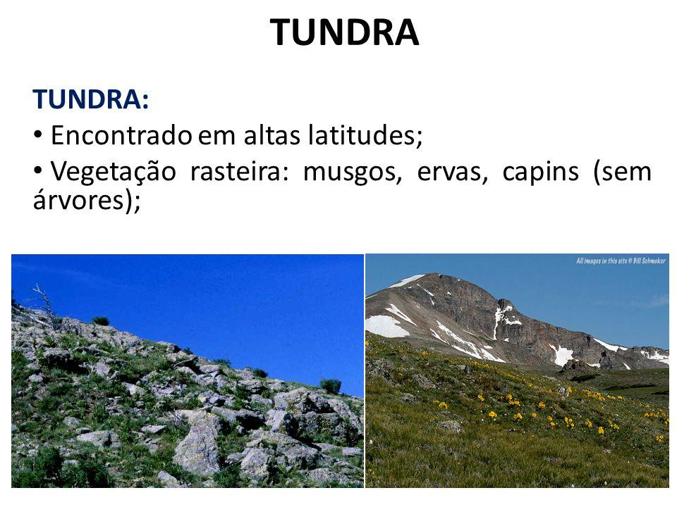 TUNDRA TUNDRA: Seca fisiológica: solo encharcado, mas congelado; Cobertas de neve durante 10 meses do ano; Pouca diversidade de espécies; Índice pluviométrico baixo, temperatura média de - 6° C.